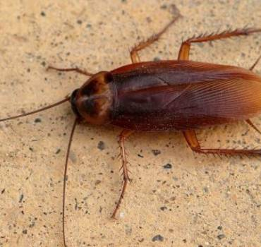 Cockroach Elimination